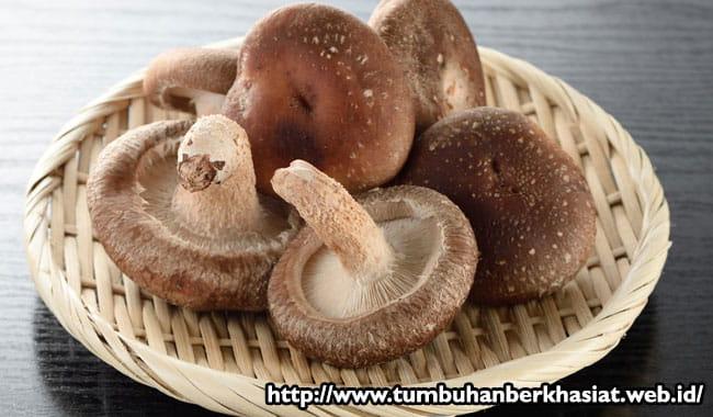 jamur-shiintake