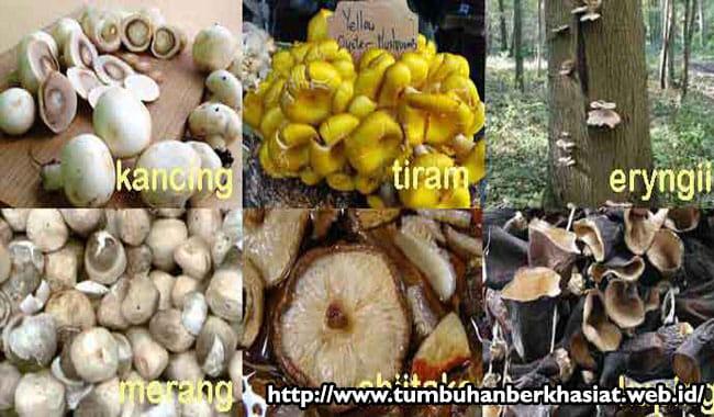 jenis-jamur-yang-dikonsumsi