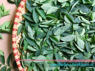 8 manfaat daun katuk