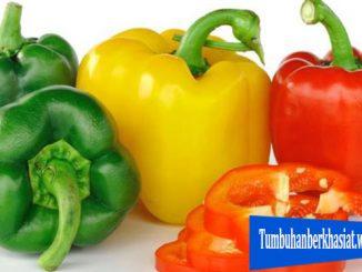 Manfaat Makan Paprika