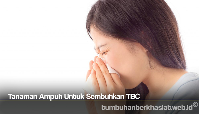 Tanaman Ampuh Untuk Sembuhkan TBC