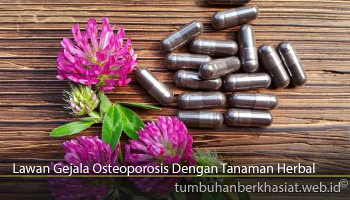 Lawan Gejala Osteoporosis Dengan Tanaman Herbal