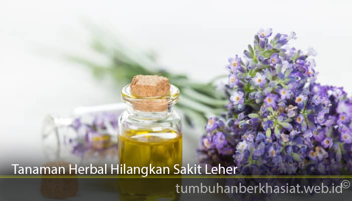 Tanaman Herbal Hilangkan Sakit Leher