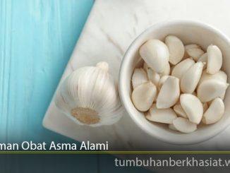 Tanaman Obat Asma Alami