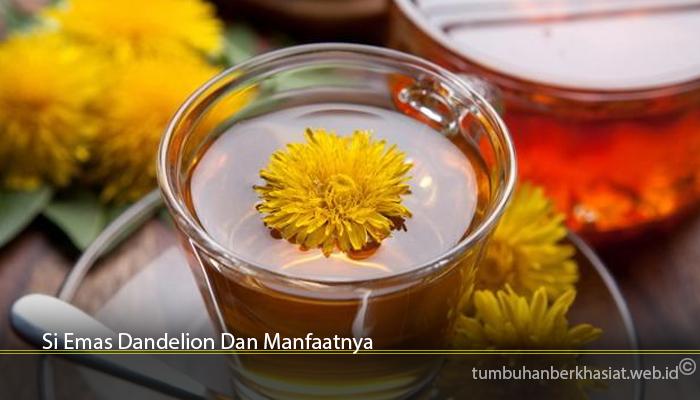 Si Emas Dandelion Dan Manfaatnya